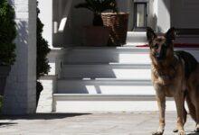 रिपोर्ट: 'बिटिंग हादसा' के बाद व्हाइट हाउस से बाहर निकले जो बिडेन के कुत्ते