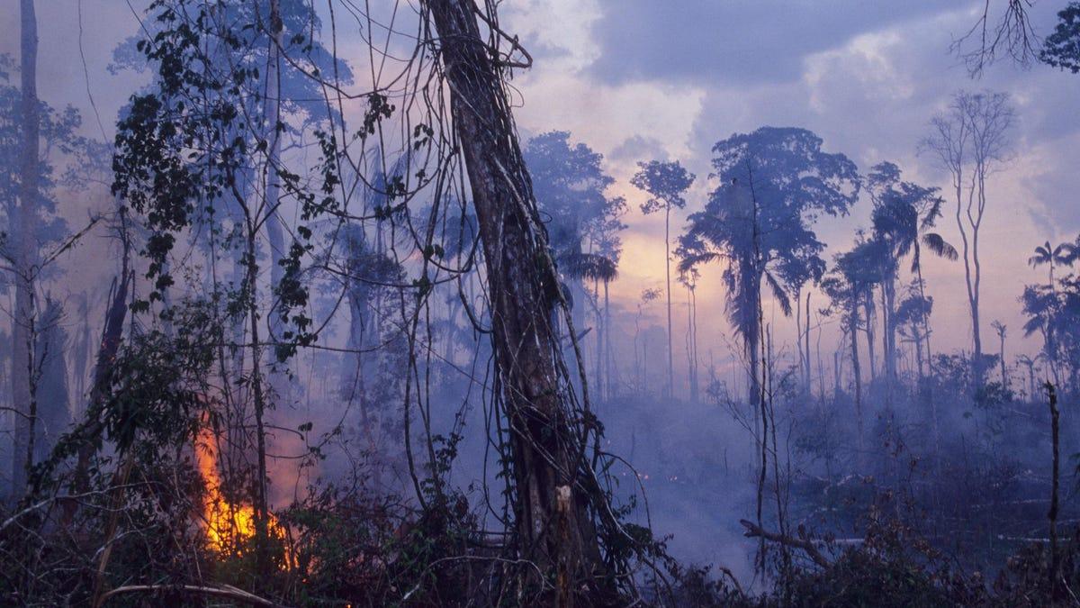 अमेज़ॅन वर्षावन का बड़ा हिस्सा अब जितना लेता है उससे अधिक कार्बन उत्सर्जित करता है, अध्ययन पाता है